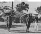 Belgian Congo Ivory Carriers